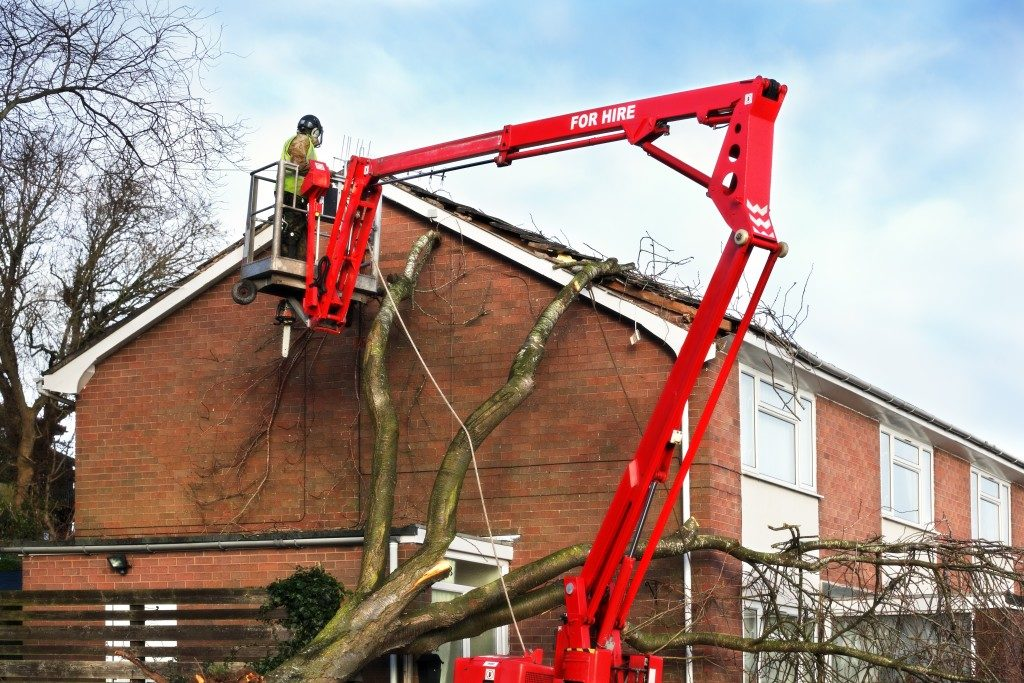 Worker using a cherry picker to remove tree branches
