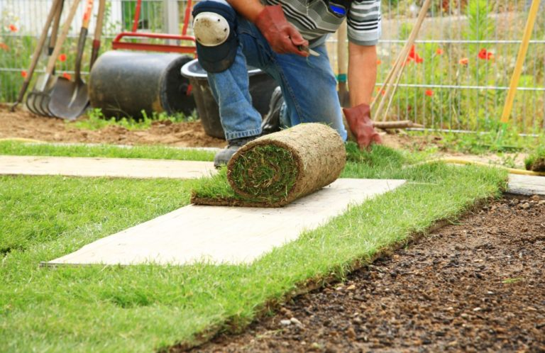 gardener rolling out turf grass