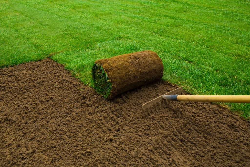 gardener applying turf grass in the backyard